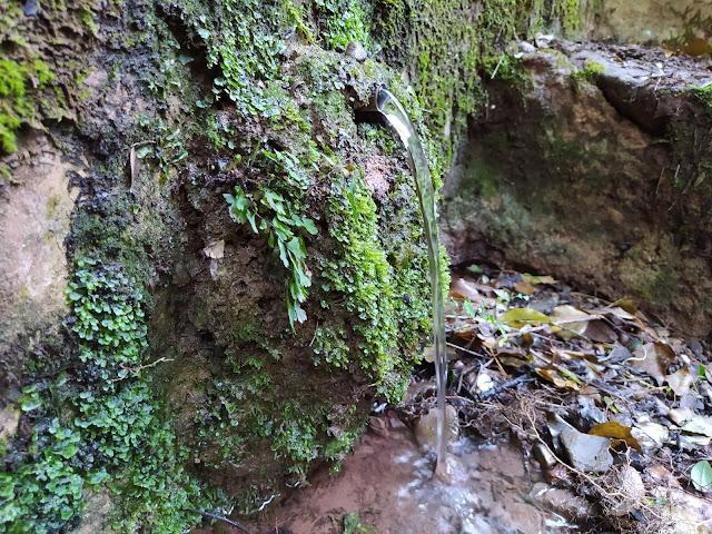 Font del Roure Monjo, Vacarisses