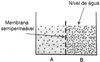 Membrana semipermeável Nível de água