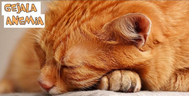 Gejala Anemia pada Kucing