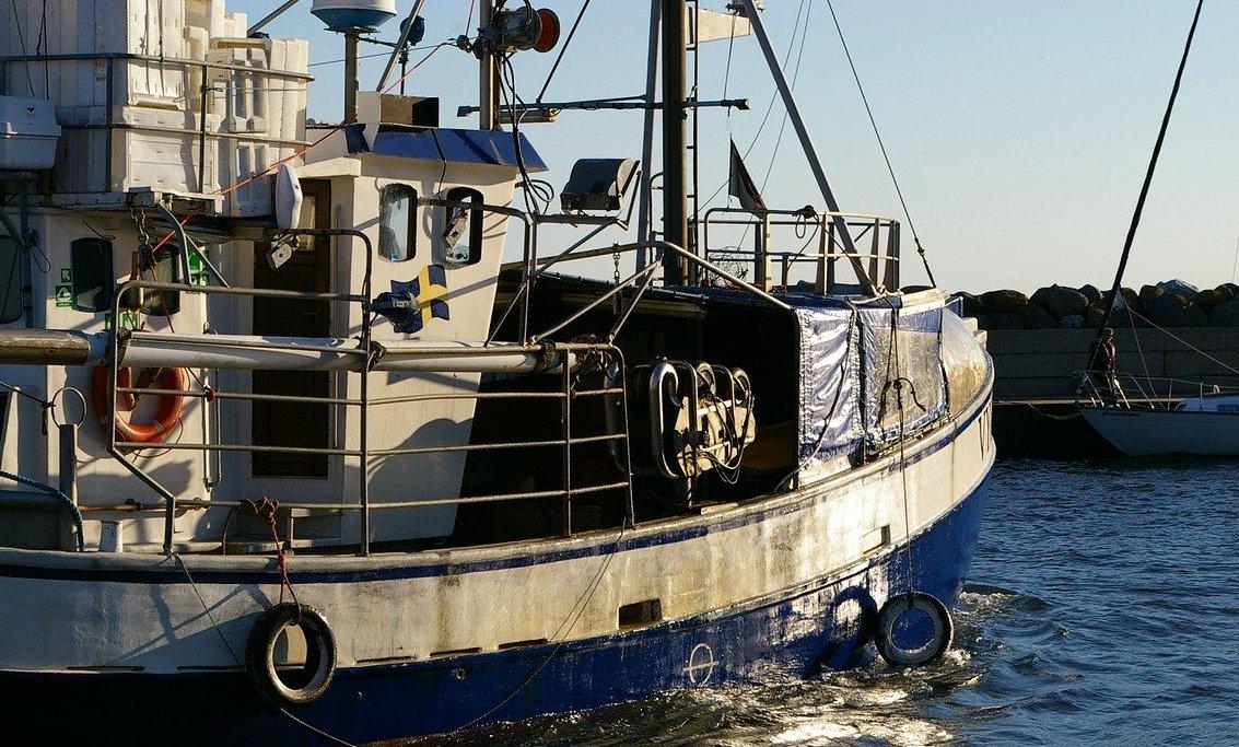 Pêche intensive en Méditerranée : cette ONG qui dénonce une « fraude généralisée »