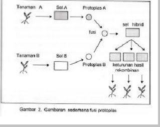 Bioteknologi di bidang pertanian