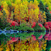 Colourful Tree shadow in River Wallpaper