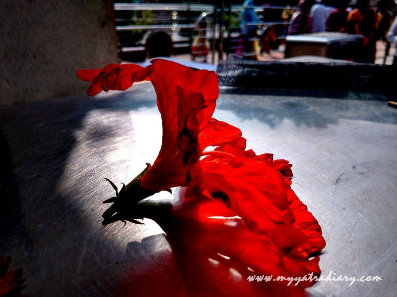 A red flower at Shani Shinganapur Temple, Maharashtra