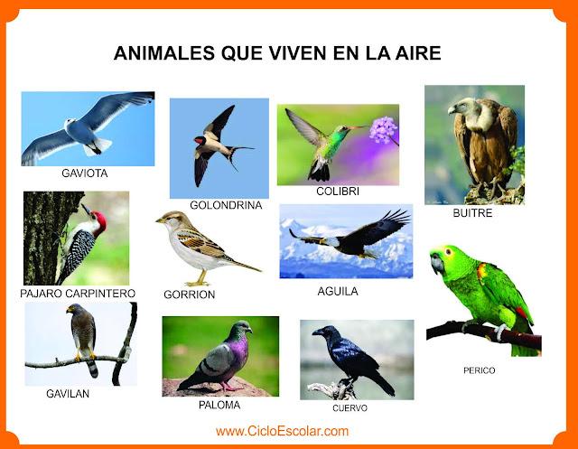 Ejemplos de animales voladores (aves)