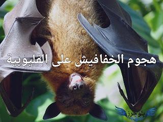 هجوم الخفافيش على القليوبية ومخاوف من حملها لفيروس كورونا, خفافيش, فيروس كورونا, خفافيش تهاجم قرية