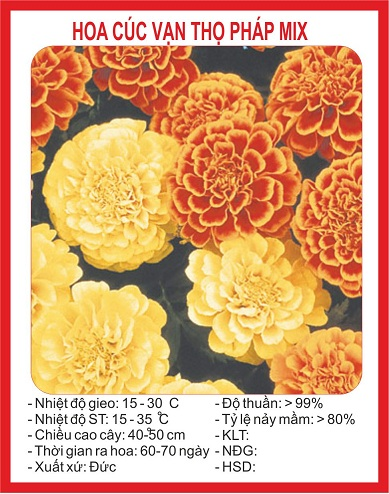 Hình ảnh trên bao bì gói hạt giống hoa Cúc vạn thọ pháp