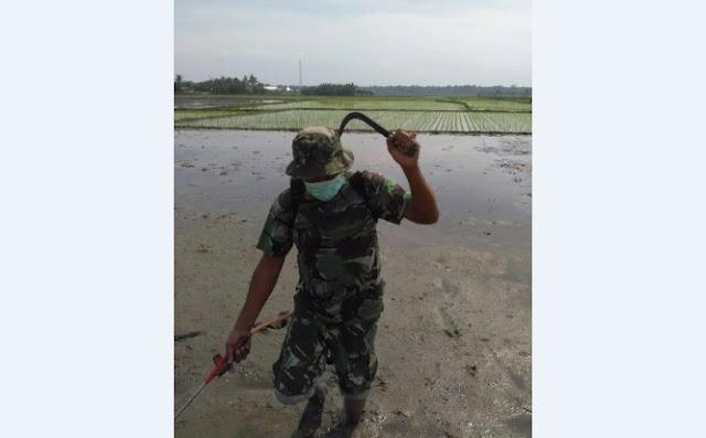 Serda S. Manik Dampingi Anggota Poktan Nusa Indah, Pembibitan (Penyamaian) di Desa Naga Kisar