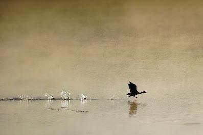 Fåger som lyfter i soluppgång