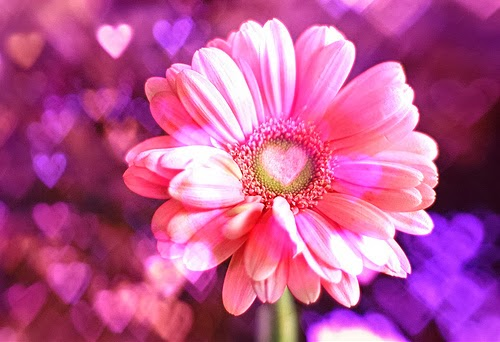 Kata Kata Kesetiaan Cinta Sejati