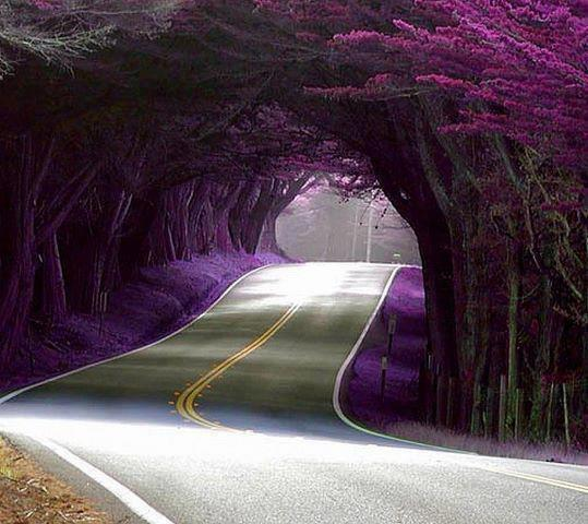 Amazing Pictures: Amazing World & Fun: Beautiful Tree Tunnels