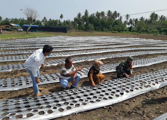 Babinsa bersama masyarakat Melaksanakan penanaman bawang merah