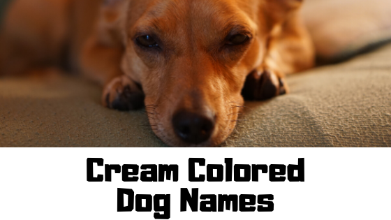 150+ Cream Colored Dog Names