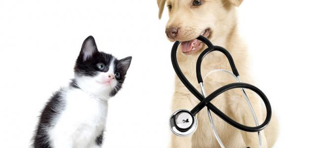 The most common dog diseases and symptoms | cat and dogs