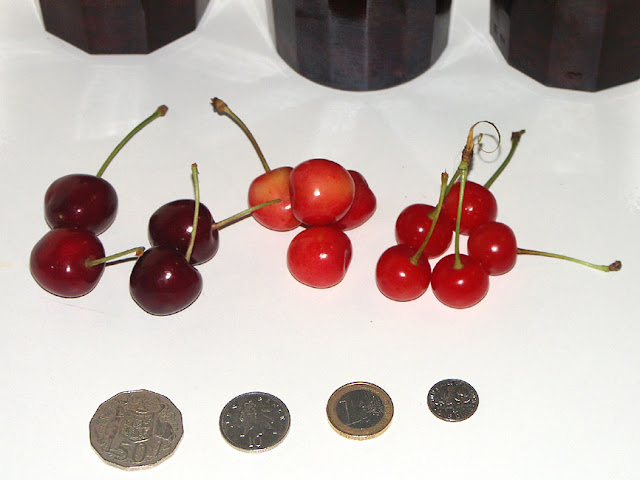 Comparison of cherries. Photo by Loire Valley Time Travel.