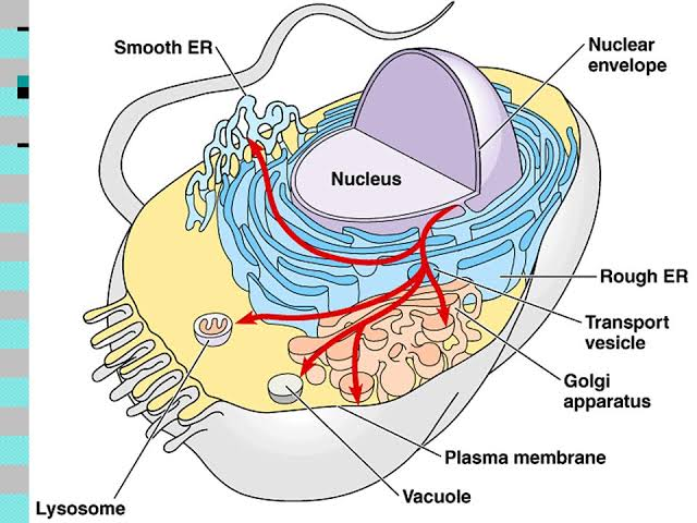 All sub-cellular organelles explained in details