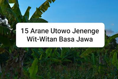 Arane Wit-witan ing Basa Jawa