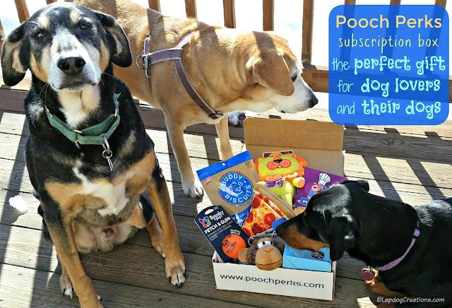2 rescued senior hound mix dogs