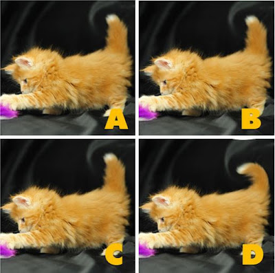 Quiz Diva - Kitty Difference Answers (40 Questions) - Score 100% image2