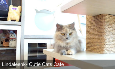 Cutie-Cats-Cafe-Kemang-Review