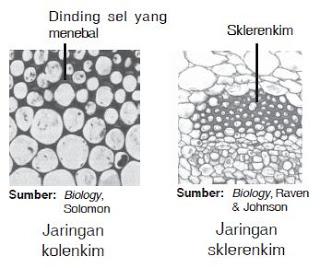 Jaringan pada tumbuhan dan hewan jaringan penyokong pada tumbuhan terdiri atas jaringan kolenkim dan jaringan sklerenkim sel sel penyusun jaringan kolenkim berdinding tebal dan menunjang ccuart Choice Image