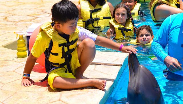 Dolphin Interactive Program no Parque Dolphinaris Park em Cancún