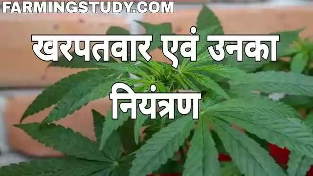 kharpatwar, खरपतवार क्या है अर्थ एवं परिभाषा, kharpatwar kya hain, kharpatwar kise kehte hain, खरपतवार नियंत्रण की प्रमुख विधियां, खरपतवारनाशी, weed in hindi