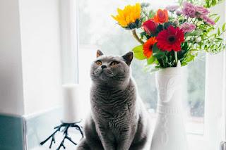 Pretty ombre vases