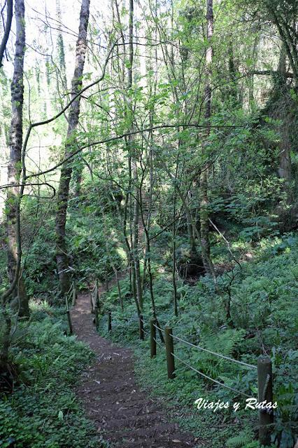 árboles de las Cuevas de Andina