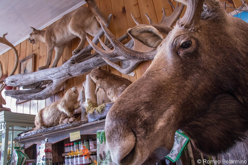 Kamp Kamp Moosehead Lake Indian Store Things to Do in Moosehead Lake Maine