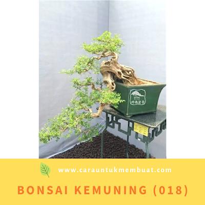 Bonsai Kemuning (018)