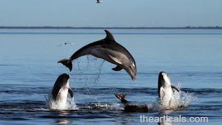 डॉल्फिन के बारे में 24 रोचक तथ्य, 24 interesting facts about dolphins