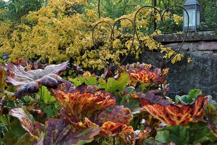 XXL Stauden Hingucker im Garten