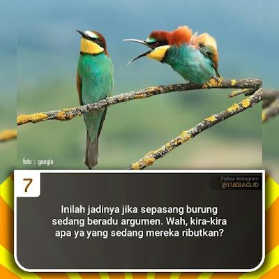 Foto Lucu Burung Sedang Bertengkar