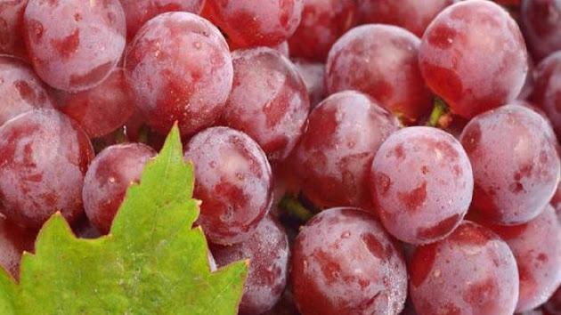 Manfaat Buah Anggur Merah Bagi Kesehatan Cukup Banyak, Inilah 6 Manfaat Buah Anggur Merah bagi Kesehatan, Penting Dikonsumsi Teratur