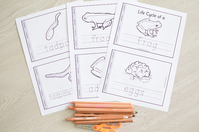 FROG LIFE CYCLE MAKING BOOKLETS
