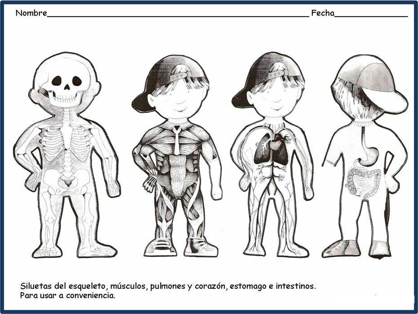 Sistema Oseo De Un Nino