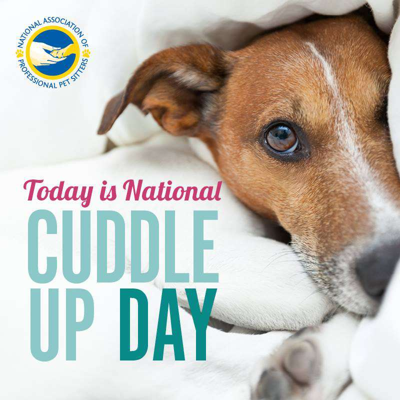 National Cuddle Up Day Wishes Unique Image