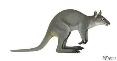 endangered wallabies