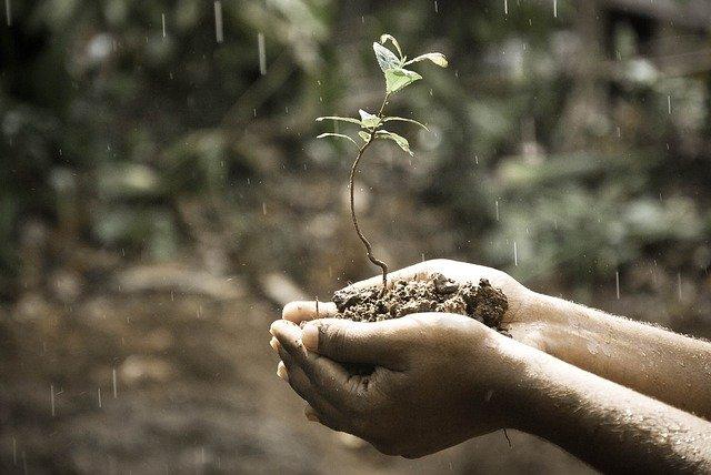 التربة - مورد طبيعي أساسي