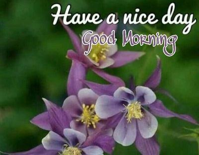 Amazing Images of Good Morning Wishes with Flowers