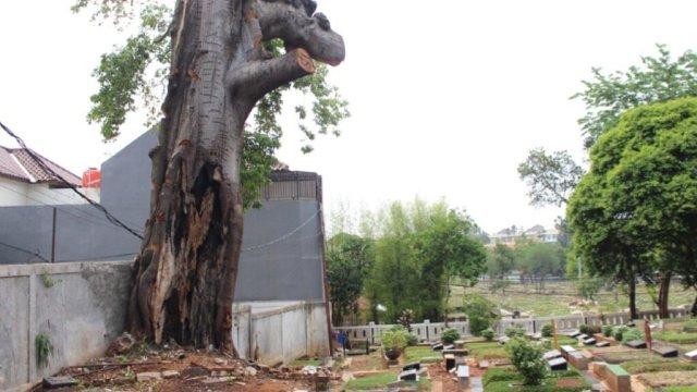 Pohon angker di TPU Jeruk Purut