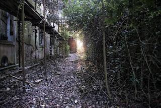 Abandoned Poveglia Island
