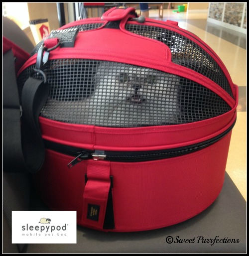 Truffle at the vet in the red Sleepypod
