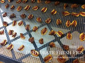 figs in dehydrator
