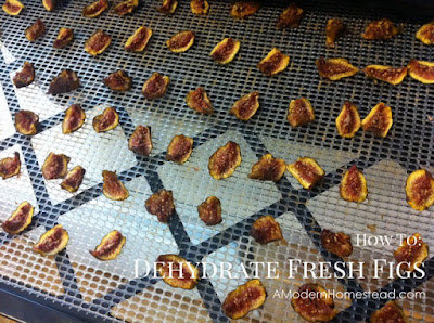 figs in dehydrator