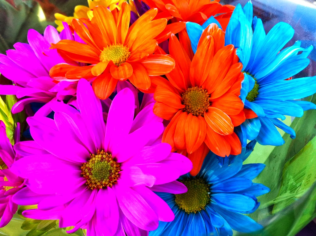 All 4u HD Wallpaper Free Download : Rainbow Flowers