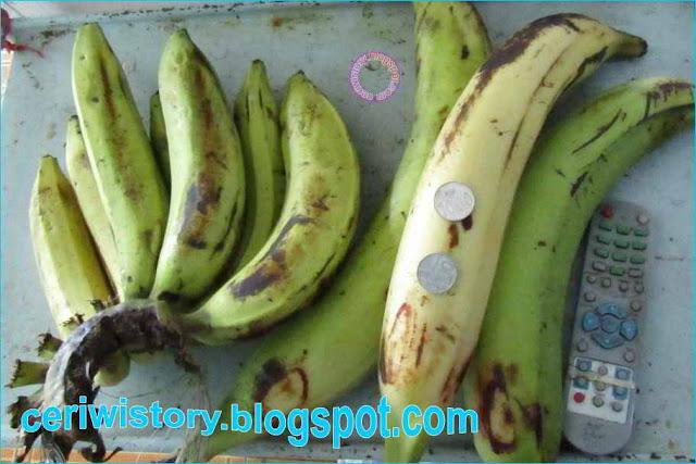 gambar pisang raksasa, cepat bisa,