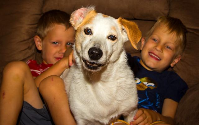 c481aa9cef0a Δύο απίστευτα περιστατικά με πρωταγωνιστές δύο σκύλους και δύο μικρά παιδιά  έλαβαν χώρα στις Ηνωμένες Πολιτείες Αμερικής. Και οι δύο περιπτώσεις  αποτελούν ...