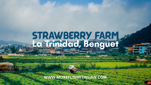 Strawberry Farm Baguio entrance fee 2019 Strawberry Farm Baguio opening Hours Macky's Strawberry Farm Strawberry Farm Baguio entrance fee 2020 Strawberry season in Baguio 2019 Strawberry production in La Trinidad, Benguet Strawberry farm tour Strawberry picking season