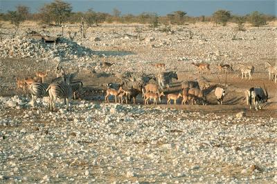 Namibia, Etosha National Park, watering hole, water hole